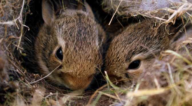 Creature Thoughts: May 2020, Wildlife Season